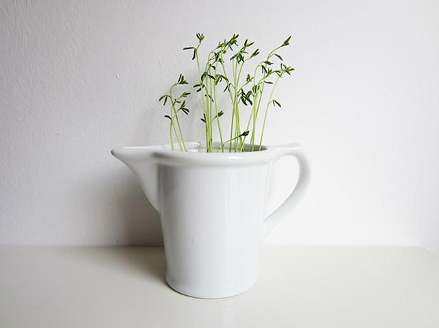 Cómo montar un pequeño Jardín en casa